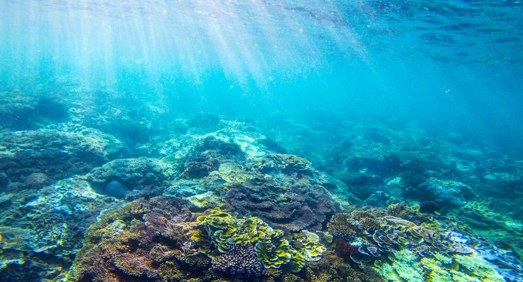 vi tảo biển Spiralin