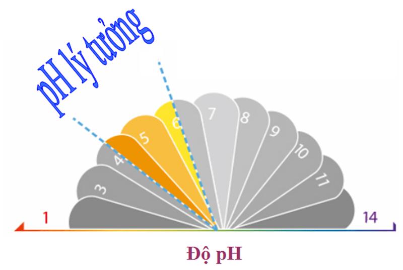 Độ pH lý tưởng