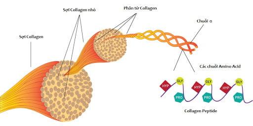 collagen-tam-quan-trong-1