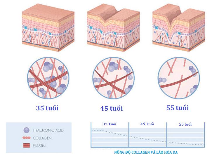 collagen-tam-quan-trong