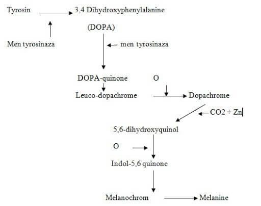 Quá trình tổng hợp chất