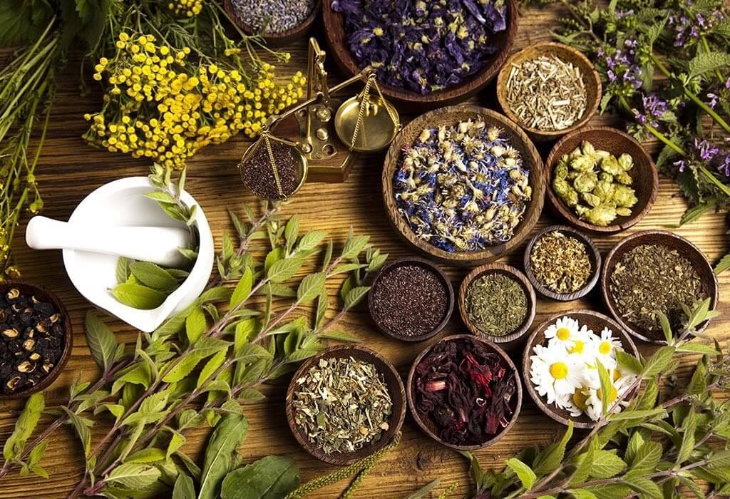 Các thảo dược giúp loại bỏ chất độc