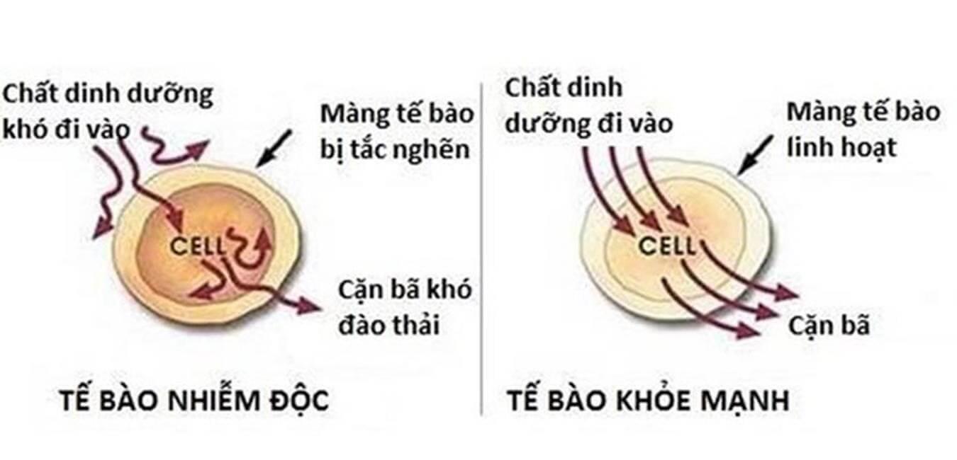 Hoạt động khác nhau giữa tế bào yếu và mạnh