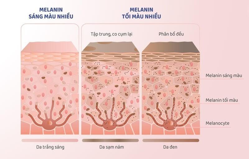 Khác biệt của melanin của các loại da