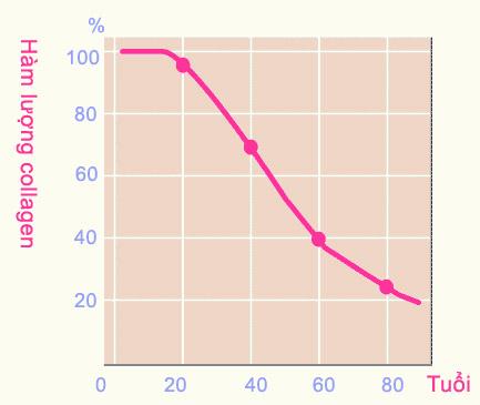 Hàm lượng collagen theo từng độ tuổi