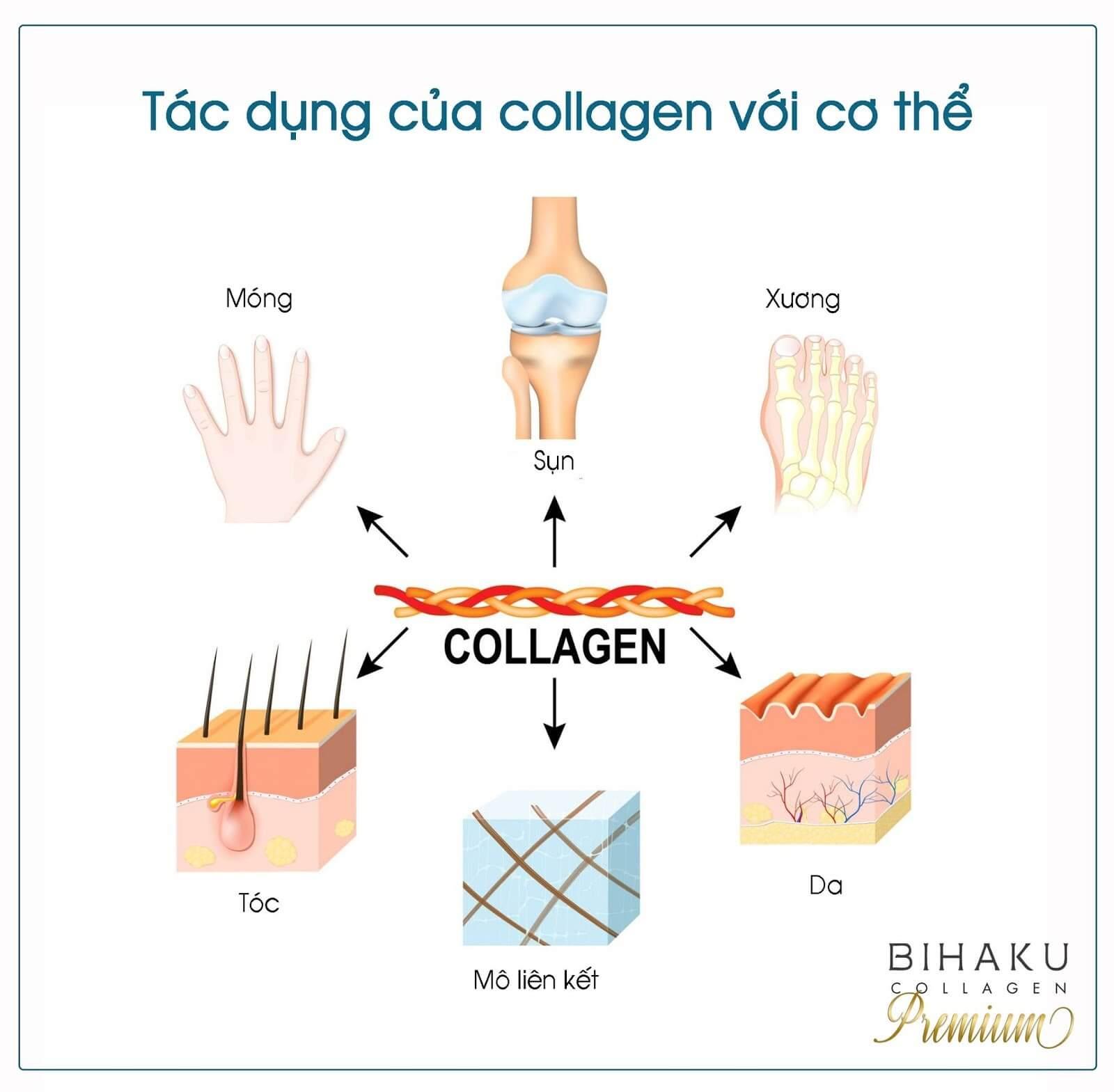 Tác dụng của collagen đối với cơ thể